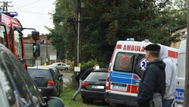 Photo of W Sulejowie amstaf pogryzł roczne dziecko