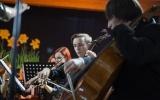 koncert rozprza (7)