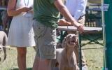 wystawa psów (24)