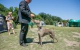 wystawa psów (6)
