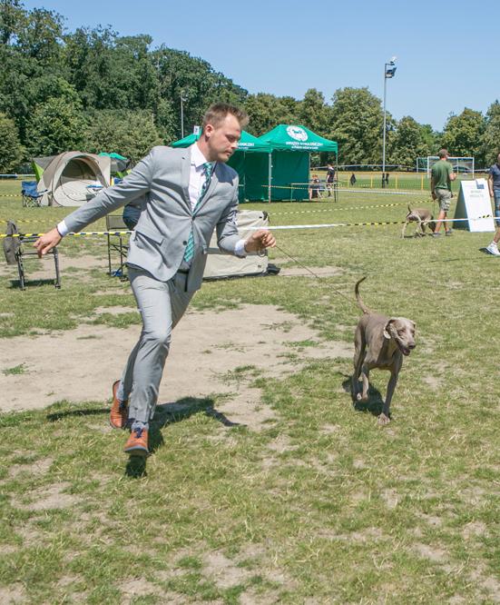 wystawa psów (17)