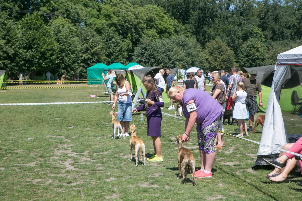 wystawa psów (2)